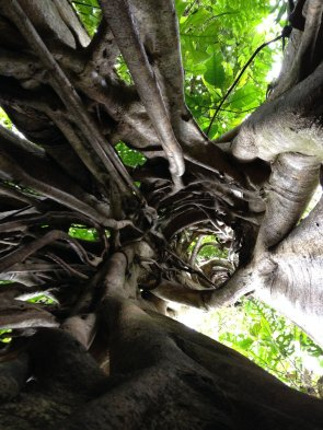Image result for hollow parasite tree